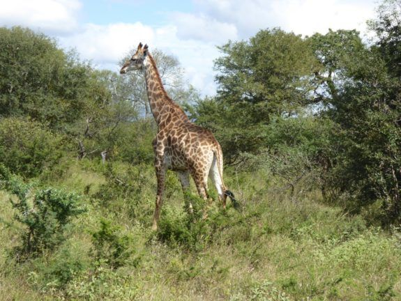 Exciting African Safari in Kruger National Park